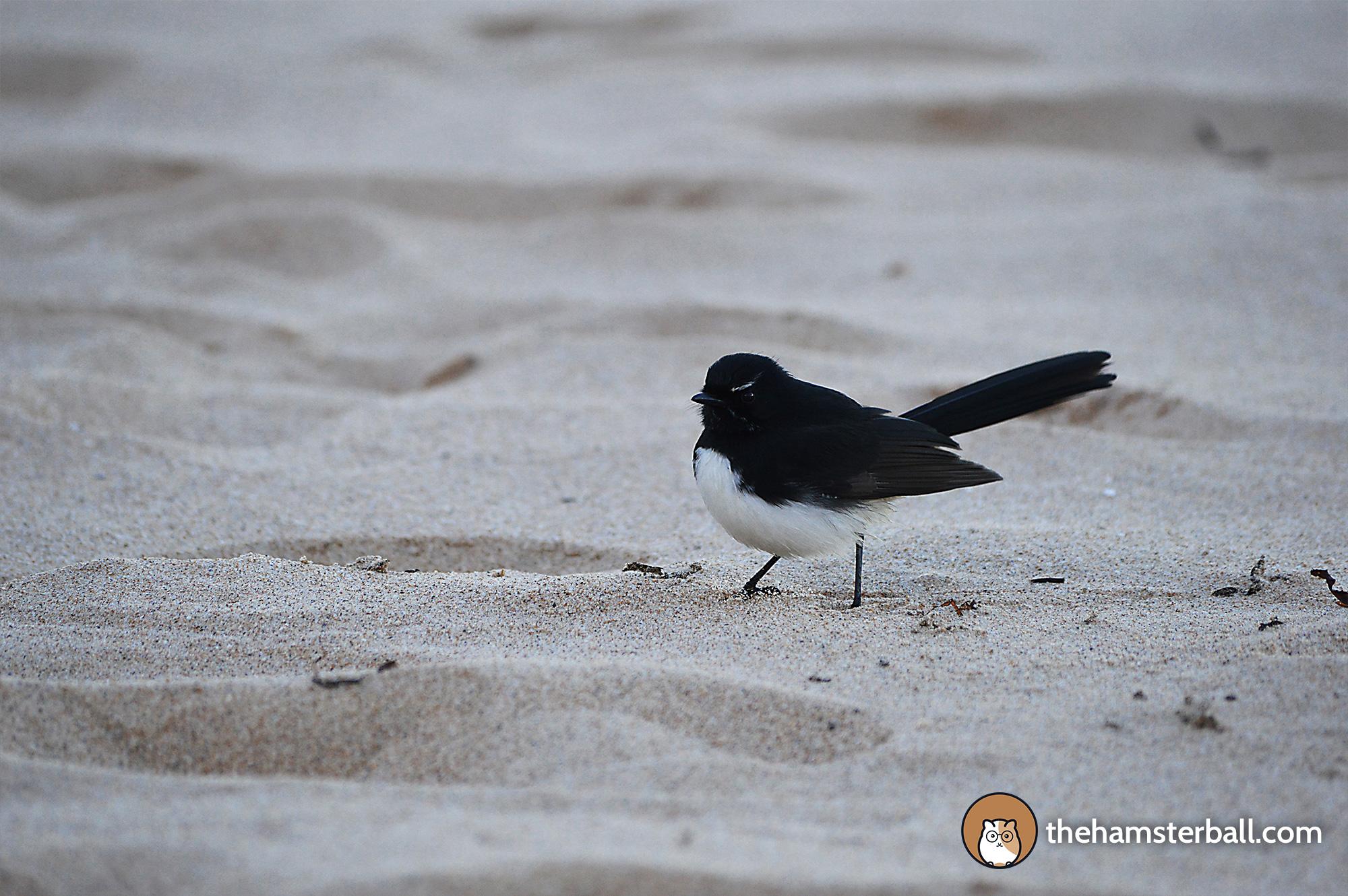 Seagull, Austinmer Beach, Wollongong, Australia