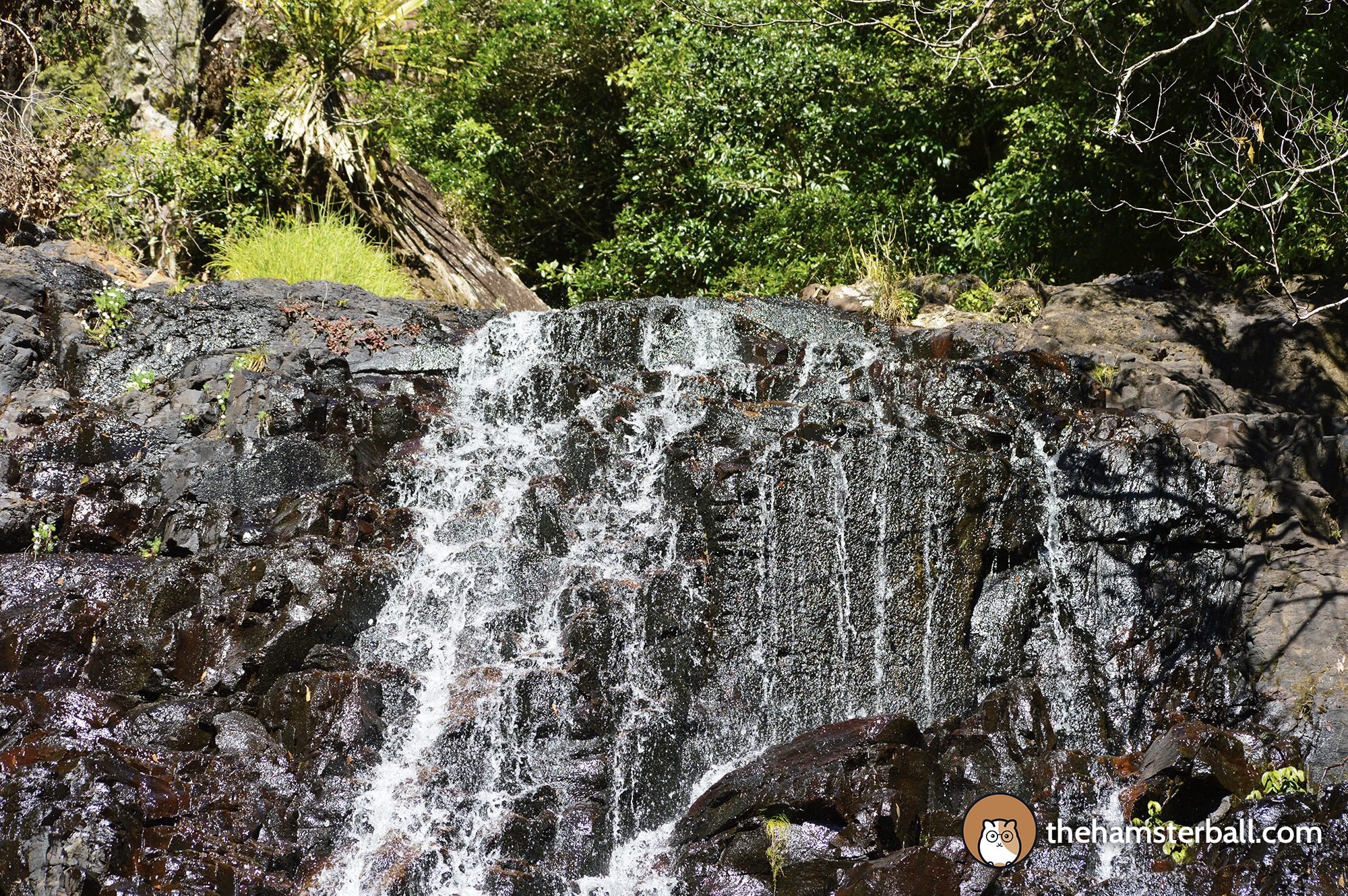 Warrie Circuit, Springbrook, Waterfall