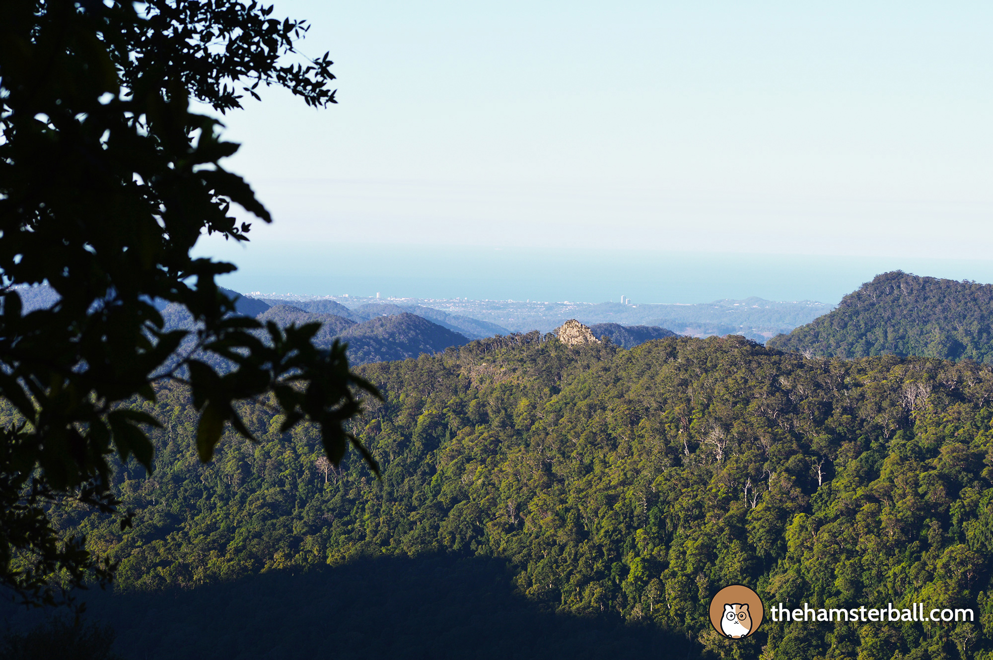 Warrie Circuit, Springbrook National Park