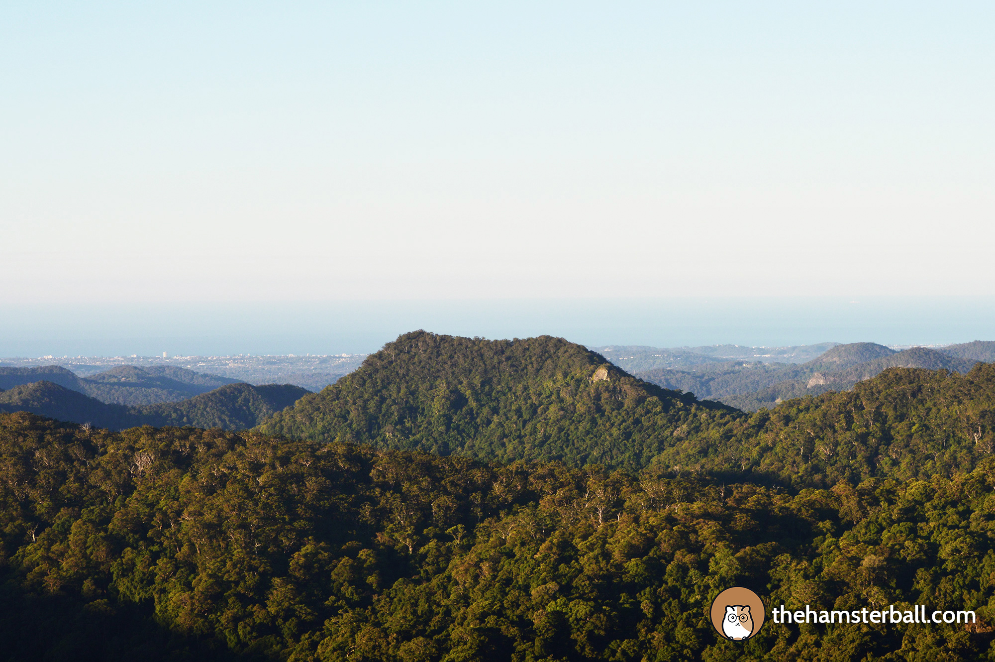 Warrie Circuit, Springbrook, Forest